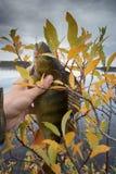 Goede visserij op Noordelijke rivieren, gevangen toppositie stock afbeeldingen