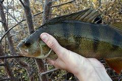 Goede visserij op Noordelijke rivieren, gevangen toppositie stock foto