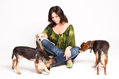 Goedgekeurde honden Royalty-vrije Stock Foto