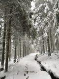 Goethe väg till Brockenen till och med den Harz nationalparken i vinter royaltyfri bild
