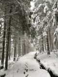Goethe Way to the Brocken through the Harz National Park in winter royalty free stock image