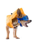Goggle dog Royalty Free Stock Photography