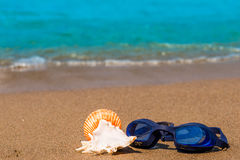 Goggles for swimming and seashells Stock Image