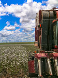 Cotton harvest. GOIAS, BRAZIL, April 14, 2004. A cotton field is being picked during the fall harvest Royalty Free Stock Photography