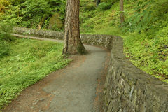 Going Around. Foot path and stone wall curve around a tree, on the trail to Wahkeena Falls in the historic Columbia River Gorge National Scenic Area, Oregon Stock Photo