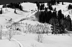 Going Back Up for Lap 3. Black and white image of back-country skiing Stock Photos