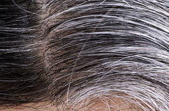 Going gray. Woman gray and black hair roots Stock Images