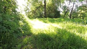 Going out of the green undergrowth to sunlight. Going out of the green undergrowth to sunlight stock footage