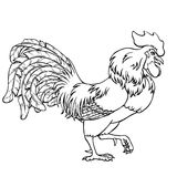 Going rooster black contour on white. Going rooster black contour line on white background. Fiery cock, chicken a symbol of the Chinese new year 2017. Vector Royalty Free Stock Photography