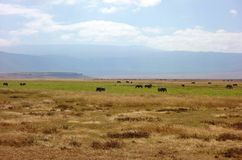 Going on safari in the NgoroNgoro Conservation Area near Arusha, Tanzania Royalty Free Stock Images