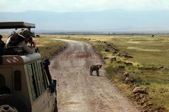 Going on safari in the NgoroNgoro Conservation Area near Arusha, Tanzania Royalty Free Stock Photography
