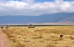 Going on safari in the NgoroNgoro Conservation Area near Arusha, Tanzania Stock Images