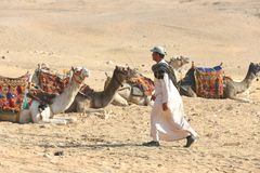 Egypt. Going the shepherd in the turban to the camels. Going the shepherd in the turban to the camels, through the desert stock photography