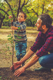 It is going to be a big tree!. Little boy helping his father to plant the tree while working together in the garden Stock Image