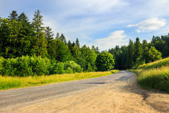 Going to coniferous forest Stock Images