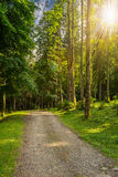 Going to deep forest in sunlight Stock Image