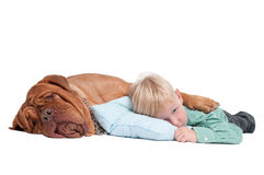 We are going to have a nap... Stock Images