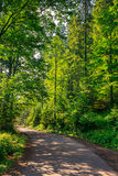 Going to nature. Asphalt road going off into the distance on the left, passes through the green shaded forest Stock Photography