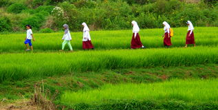Going to school. 6 girls from elementary school, on the line across the paddies fields to reach their school Royalty Free Stock Image