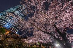 A going to see cherry blossoms at night and Roppongi Hills Mori garden. Shooting location :  Tokyo metropolitan area stock images