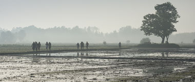 Going to work at rice farm on hazy day Royalty Free Stock Photos