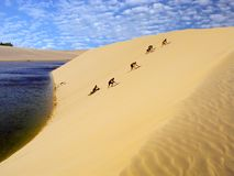 Going up the dune. Group of people going up a dune in the National Park of the Lencois Maranhenses - North of Brazil Royalty Free Stock Photos