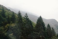 Fir trees on a hillside Royalty Free Stock Photos