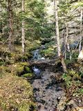 Small river among the forest full of life royalty free stock photos