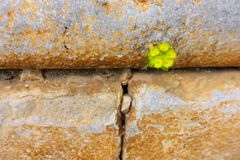 Going through the wall - Plant finds it`s own way stock photography