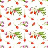Goji bär eller Lyciumbarbarum med blommor som isoleras på vit bakgrund Seamless bakgrund royaltyfri fotografi