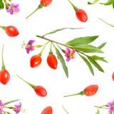 Goji-Beeren oder Lycium barbarum mit den Blumen lokalisiert auf weißem Hintergrund Nahtloser Hintergrund stockfoto