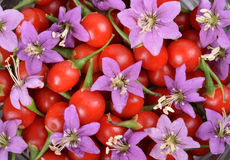 Goji berries Stock Image