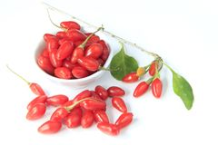 Goji berries (Lycium barbarum). Ripe, freshly picked goji berries (Lycium barbarum Stock Photos