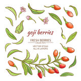 Goji berry. Goji berries vector set on white background Stock Images