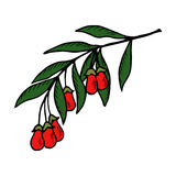 Goji berry in color. Superfood organic asian berry. Illustration in sketch style, hand drawing. Goji berry, fruit, leaf, plant branch vector illustration