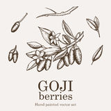 Goji berry superfood set. Health nutrient food vector hand drawing illustration Stock Image