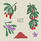 Goji on a branch hand drawn set. Collection blooming, dry berry. Vector sketch  colorful vintage illustration. Royalty Free Stock Photos