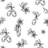 Goji pattern_4 Imagens de Stock Royalty Free
