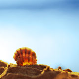 Gokarna nature. Shell on the ocean beach Royalty Free Stock Images