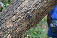 Gokarna strand - Skorpion Royaltyfri Bild