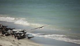gokceada海浪冲浪者冲浪的火鸡挥动风风帆冲浪者 库存图片