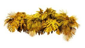 Gol tropical do arranjo floral do arbusto da planta da folha das folhas douradas imagem de stock