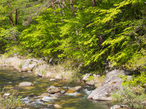 Gola di Shosenkyo nel verde fresco a Kofu, Yamanashi, Giappone immagine stock