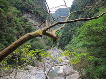 Gola di Taroko, Hualien, Taiwan fotografia stock libera da diritti