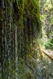 Gola di Wutach con il fiume nell'erba di moos - camminando nel bello paesaggio del più blackforest, Germania immagine stock libera da diritti
