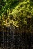 Gola di Wutach con il fiume nell'erba di moos - camminando nel bello paesaggio del pi? blackforest, Germania immagini stock