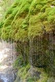 Gola di Wutach con il fiume nell'erba di moos - camminando nel bello paesaggio del pi? blackforest, Germania fotografie stock