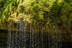 Gola di Wutach con il fiume nell'erba di moos - camminando nel bello paesaggio del pi? blackforest, Germania fotografia stock