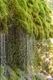 Gola di Wutach con il fiume nell'erba di moos - camminando nel bello paesaggio del pi? blackforest, Germania immagine stock libera da diritti