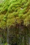 Gola di Wutach con il fiume nell'erba di moos - camminando nel bello paesaggio del pi? blackforest, Germania fotografie stock libere da diritti